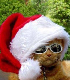 #cat #christmas