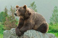 Sandee Rice Photography - www.sandeericephotography.smugmug.com - #Alaska #Bears