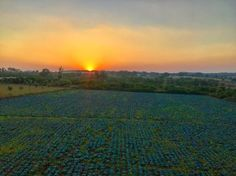 Sunset view from the treehouse! Sunset Love, Sunset Pics, Sunset Pictures, Travel Tours, Treehouse, Farm Life, Farms, Sunsets, Cabbage