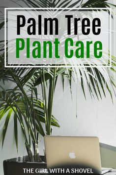Palm Plant Care Keep your indoor palm alive and well! Check out my post on Palm Plant Care to figure Palm Plant Care, Palm Tree Care, Palm Tree Plant, Areca Palm Care, Indoor Palm Trees, Indoor Palms, Indoor Flowers, Apartment Plants, Bedroom Plants