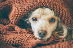 Can dogs take ibuprofen? And what should you do if your dog ate ibuprofen? Here's what to know about ibuprofen and dogs. Dog Health Tips, Dog Health Care, Lyme Disease In Dogs, Pancreatitis In Dogs, Bluetick Coonhound, Sick Dog, Dog Safety, Dog Eating, Pets