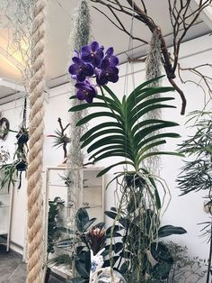Creative Hanging Plants Ideas For Indoor - Wittyduck Orchid Plants, Air Plants, Best Indoor Hanging Plants, Marble Queen Pothos, Hanging Orchid, Orchids In Water, Orchid House, Orquideas Cymbidium, Growing Orchids