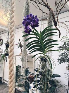 """Vandas: como cuidar desse tipo de orquídea (Foto: Flo Atelier Botanico) ❥""""Hobby&Decor """"   @hobbydecor/instagram   decor   interiordesign   arquitetura   art   paisagismos"""