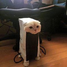 Da ist wohl mal wieder eine Katze im Sack - nein - in der Tüte!