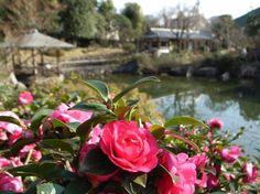 Toshima Isla de la camelias