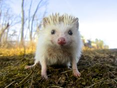 25 Hedgehogs Guaranteed to Destroy You With Cute