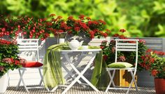 Find White Furniture Red Flowers On Balcony stock images in HD and millions of other royalty-free stock photos, illustrations and vectors in the Shutterstock collection. White Furniture, Garden Furniture, Outdoor Furniture Sets, Outdoor Decor, Small Balcony Garden, Balcony Ideas, Balcony Gardening, Balkon Design, Garden Web