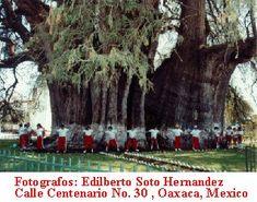 Arbol del Tule, Mexico
