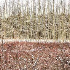 Quiero ver nieve. #snow #wood