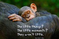 The little things. The little moments. They aren't little. ~ John Kabat-Zinn
