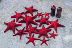 Sea stars with montana colors.  #starfish #seastars #montana #art #sea #beach #red #hellas #spraypaint #color #montanacans #mtncolors #stars