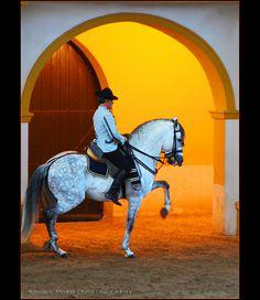 http://www.soladore.nl/Paradores/Arcos%20de%20la%20Frontera.html Caballo Español (Spanish Horse) Jerez de la Frontera, Spain
