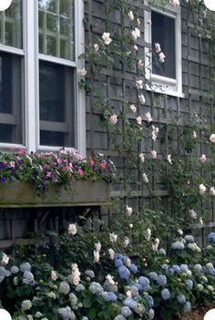 nantucket garden images