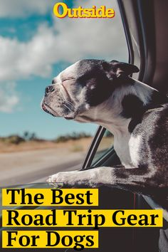 The Best Gear for Car Travel with Your Dog Cat Vs Dog, Pet Dogs, Big House Cats, American Dog, Cat With Blue Eyes, Pet Gear, Pet Travel, Warrior Cats, Mans Best Friend