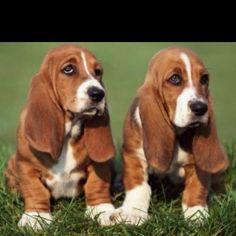 Twin puppy <3