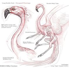 Image result for flamingo anatomy