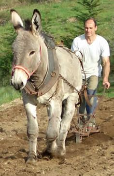 In my imagination, this is what I do on my farmette with my darling donkey! Donkeys and mules Learn about #HorseHealth #HorseColic www.loveyour.horse