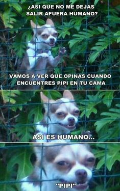 Best Ideas For Memes En Espanol Chistosos De Mamas Funny Animal Memes, Animal Jokes, Funny Animals, Funny Jokes, Hilarious, Dog Jokes, Memes Humor, New Memes, Humour Quotes