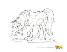 Kolorowanka - Koń na łące - kolorowanka dla dzieci
