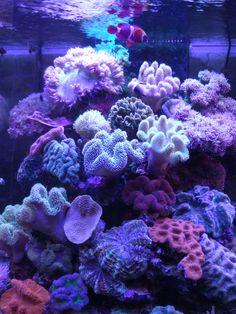 Amazing Marine Aquarium!
