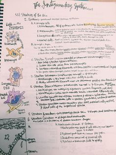 Sliding Filament Theory Of Muscle Contraction Revision Card