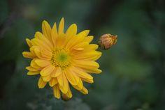 Explore, Flowers, Plants, Plant, Royal Icing Flowers, Flower, Florals, Floral, Planets