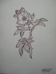 Image result for alberta wild rose tattoo