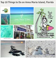 Photo Credit: Guy Harvey, AMI Turtle Watch, Food and Wine on PineTop 10 Things to Do on Anna Maria Island, Florida1. Hit The Beaches! With sand as clear as dia