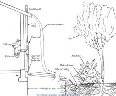 """4. A bathroom sink greywater """"spring"""" irrigating shade tree and shrubs. End of greywater pipe discharges a few inches above the mulch within the basin to prevent solids from backing up within the pipe and clogging it. End of pipe can be left visible or concealed by large rocks as long as they do not block flow (shown here).  Note: the vent stack, clean out, and a section of the drainpipe above the soil are installed on the exterior of the wall for easy access, but could instead be installed…"""