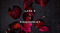 Lane 8 - Fingerprint (Original Mix) #techhouse #housemusic #primehousemusic #primehouse #primefamily #thisneverhappened Hype Machine, Online Social Networks, Shit Happens, Tech House, House Music, Youtube, Deep, Movies, Films