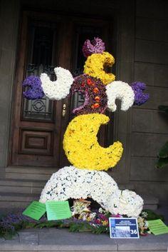 Cruces de Mayo Santa Cruz