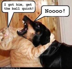 Funny Image Collection: The Funniest Dog Quotes Funny Image Collection: The Funn. Funny Image Collection: The Funniest Dog Quotes Funny Image Collection: The Funniest Dog Quotes Funny Animal Quotes, Funny Animals, Cute Animals, Animal Funnies, Animal Memes, Cat Sayings, Animal Humour, Funny Cats And Dogs, Cats And Kittens
