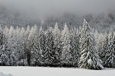 Winter, Scene, Mountain, Wonderland, Forest, Cold