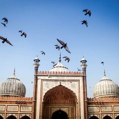 Pigeons taking flight near Jama Masjid in Delhi, India. This beautiful mosque is the perfect escape from the chaos of the Delhi streets. #incredibleindia #religion #instatravel #travelstroke #traveldeeper