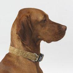 Dog Collar In Paisley Cedar Microvelvet - Size: X-small $28.95