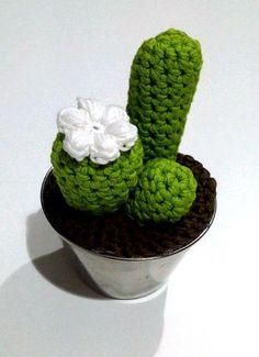 Cactus inmortal