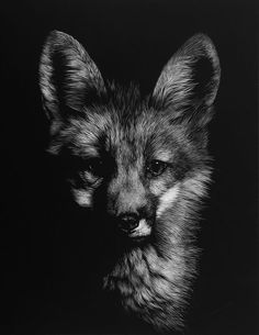 Black and white style fox
