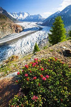 Beauty of Switzerland Some Beautiful Pictures, Beautiful Places, Places In Europe, Places To Visit, Wallis, Switzerland Tour, Alpine Flowers, Explore Dream Discover, Beau Site