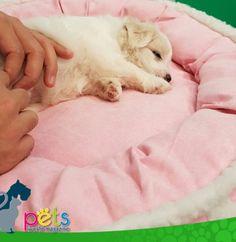 Buenas noches 😴   #PetsWorldMagazine #RevistaDeMascotas #Panama #Mascotas #MascotasPanama #MascotasPty #PetsMagazine #MascotasAdorables #Perros #PerrosPty #PerrosPanama #Pets #PetsLovers #Dogs #DogLovers #DogOfTheDay #PicOfTheDay #Cute #SuperTiernos