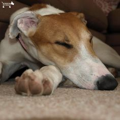 It's over and out from us, we're dog-tired :) #DoggyMember Iris