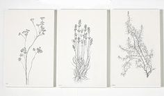 line drawings lavender - Google Search