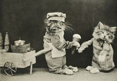 20 Spoiled Cats That Probably Live Better Than You Animals And Pets, Cute Animals, Owning A Cat, Cat Costumes, Here Kitty Kitty, Vintage Cat, Cats And Kittens, Baby Kittens, Kittens Cutest