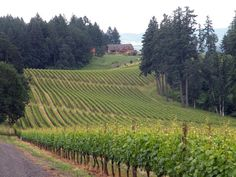 Northwest wine: Oregon hangs its reputation on Pinot Noir. Nobody in the New World has hung their hats on Pinot Noir more than Oregon, which began planting the persnickety red grape of Burgundy, France, in the late 1960s.