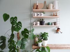 Kitchen makeover with new wall color in mint styling ideas for shelves deco Green Kitchen Walls, Mint Green Walls, Kitchen Shelves, Wood Shelves, Kitchen Worktop, Kitchen Interior, Kitchen Decor, String Regal, String Shelf
