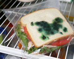 Send your kid to school with a moldy sandwich.