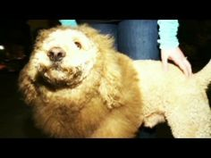 'Charles the Monarch' dog mistaken for baby lion in 911 call (VIDEO)
