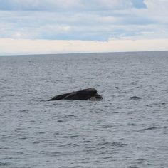 ¿Amante de las ballenas? Ven a verlas a Puerto Madryn (III)