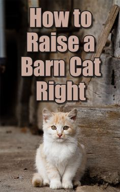Cat Care Tips How to Raise a Barn Cat Right - Countryside Network - It's a tale as old as time. Cats go with barns. Our hard working barn cats are essential as a natural way to get rid of mice. Getting Rid Of Mice, Barn Animals, Barnyard Animals, Feline Leukemia, Best Barns, Kitten Care, Cat Climbing, Outdoor Cats, Chickens Backyard