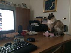 Technological cat bombi