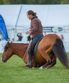 Tim Featherstone and Redcliffs Ted competing at Horse of the Year (Kaimanawa Stallion Makeover Challenge)